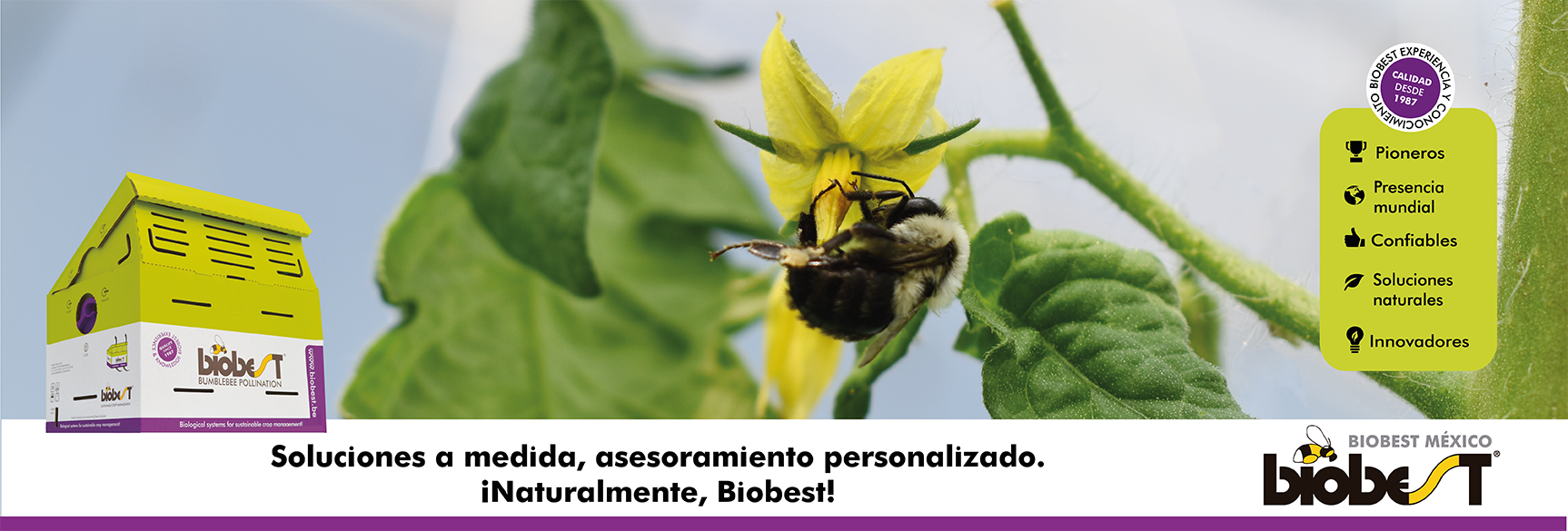 Biobest-PaginaWebInicio-01