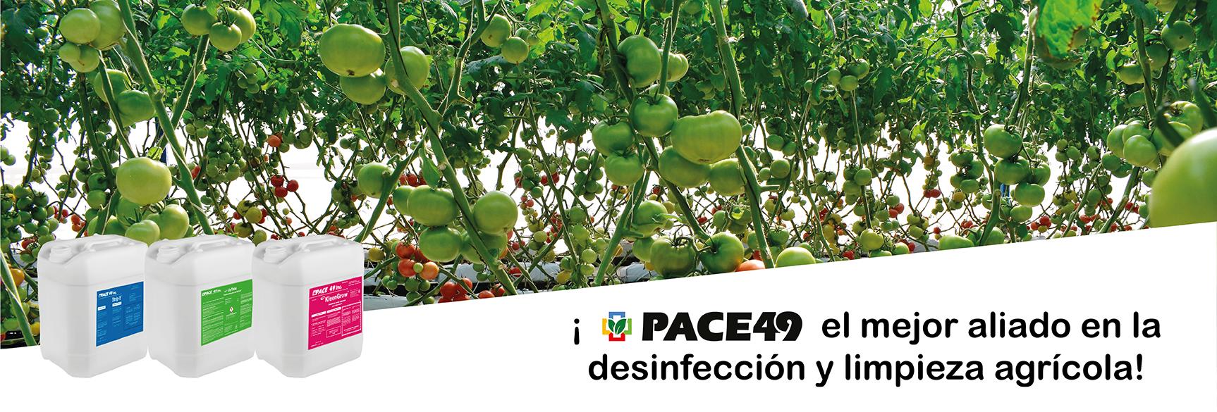 Pace-PaginaWebInicio-01